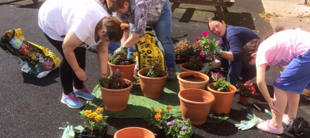 The ladies planting up a storm!